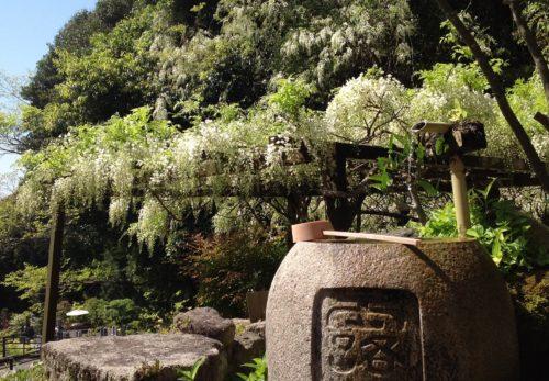 大願寺の春